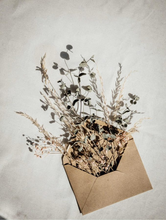A photo of a letter with multiple dead plants sprouting from it.
